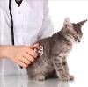 Ветеринарные клиники в Визинге